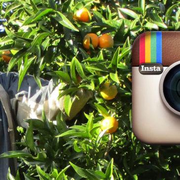 Découvrez Agrucorse sur Instagram !