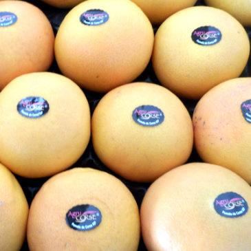 Les pomelos Agrucorse sont arrivés