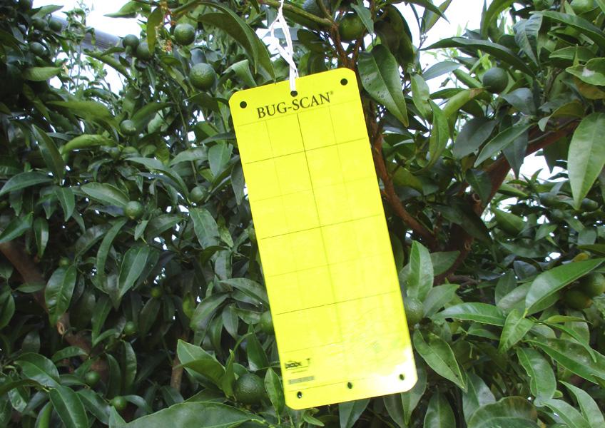 plaque_jaune