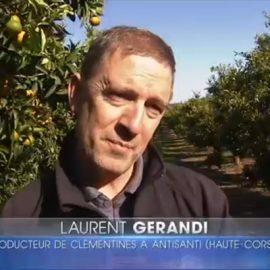 Agrucorse à l'honneur dans le 13h de TF1 du vendredi 18 novembre